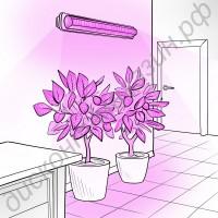 Освещение теплицы на базе эффективных 3Вт фитосветодиодов «Фомальгаут», гарантийное обслуживание - 1 год